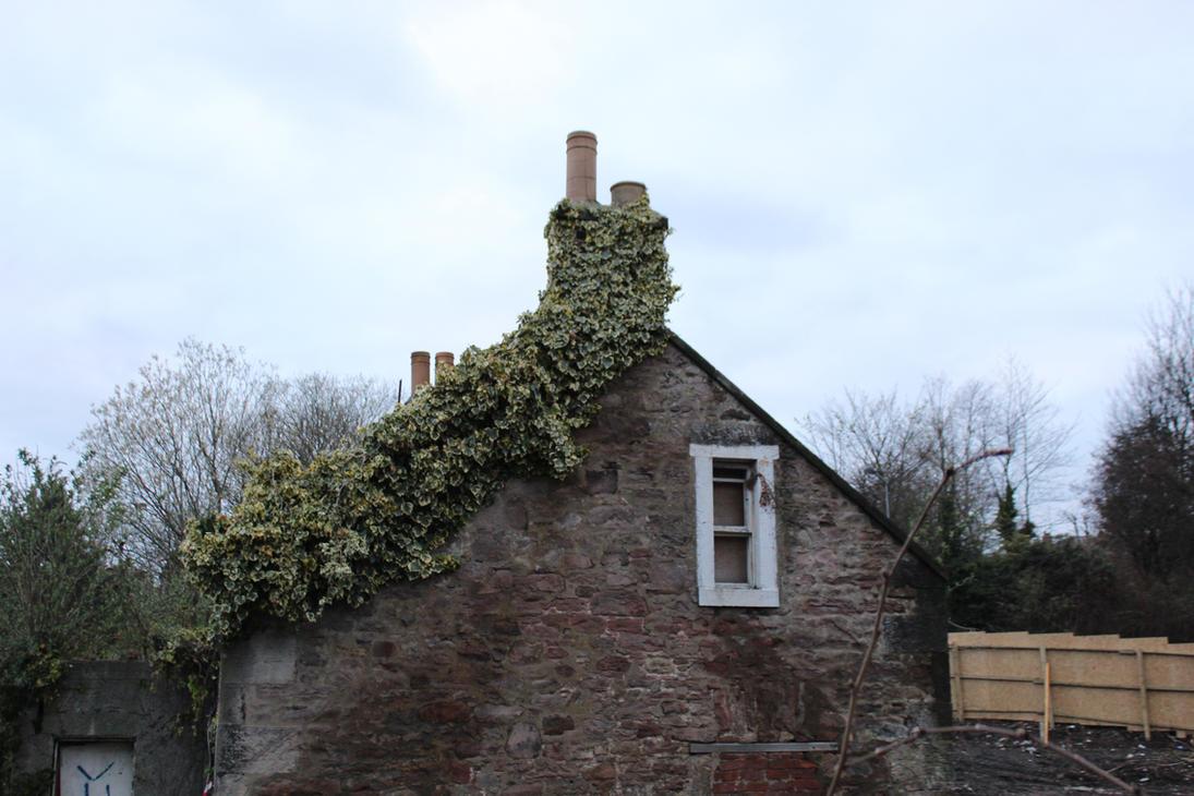 Gilmerton Goods Corner - Side Wall Ivy by corvidius