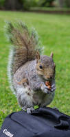 Squirrel on Camera Bag