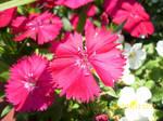 Flowers by minibubbles