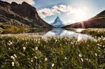 Matterhorn and the flowers