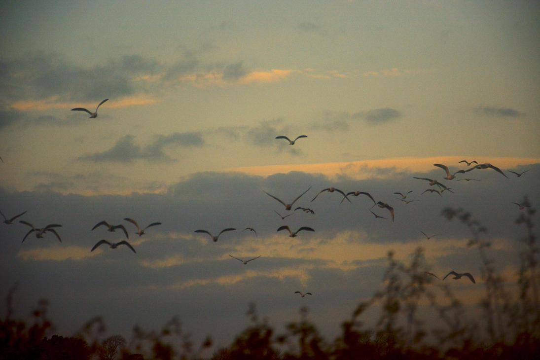 The Flock 2 by candentesomnium