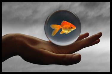 the last fish by dicalva