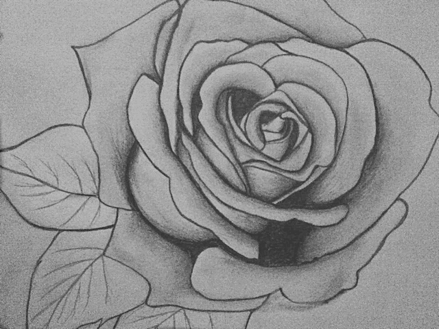 Pencil Rose Drawing by KraylaHi on DeviantArt