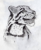 Clouded Leopard pencil drawing by wilhelmdesign