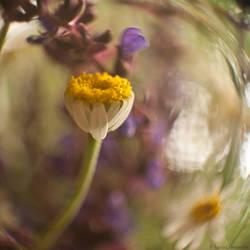 Midsummer by LuciaConstantin