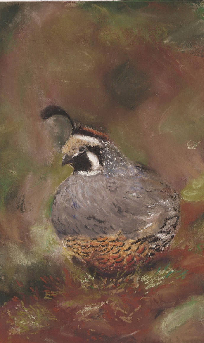 Fat little quail by multitemp