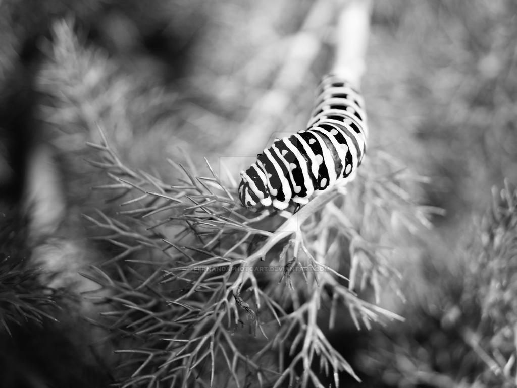 Oruga sobre una rama by FernandaPhotoArt