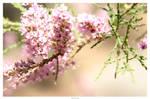 Primavera by Dasefx