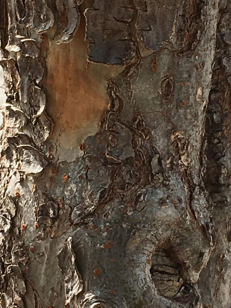 tree bark stock by TanithLipsky
