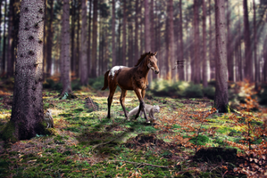 Fera: The Wild One by abrians-abrians