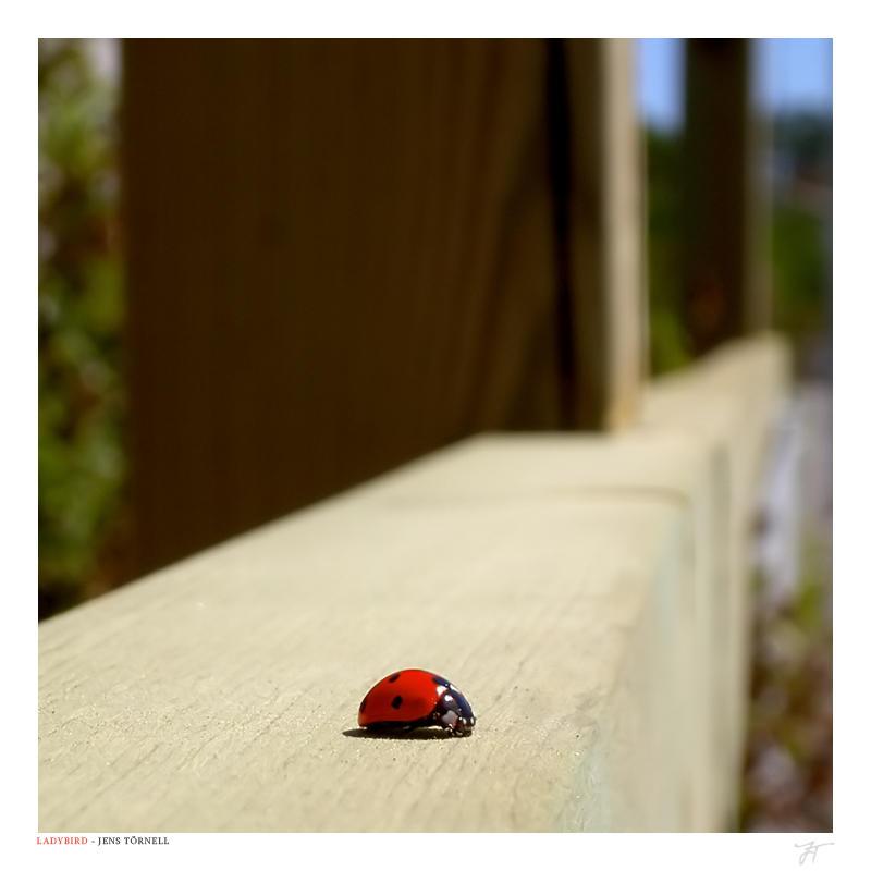 """Obrázek """"http://fc01.deviantart.com/fs12/i/2006/284/d/3/Ladybird_by_JTphoto.jpg"""" nelze zobrazit, protože obsahuje chyby."""