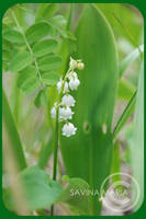 angozero 6 - lily of the valle by Marsulu