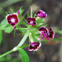 lovely flowers_23 by Marsulu