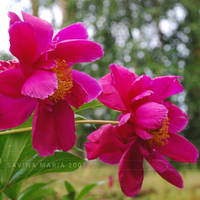 lovely flowers_28 by Marsulu