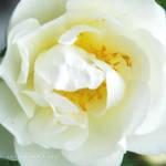 lovely flowers_51