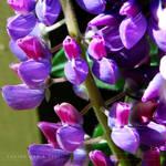 lovely flowers_52