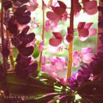 lovely flowers_56