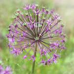 lovely flowers_57