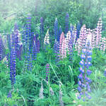 lovely flowers_59