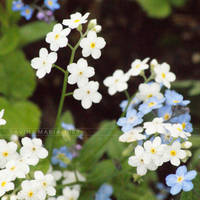 lovely flowers_123 by Marsulu