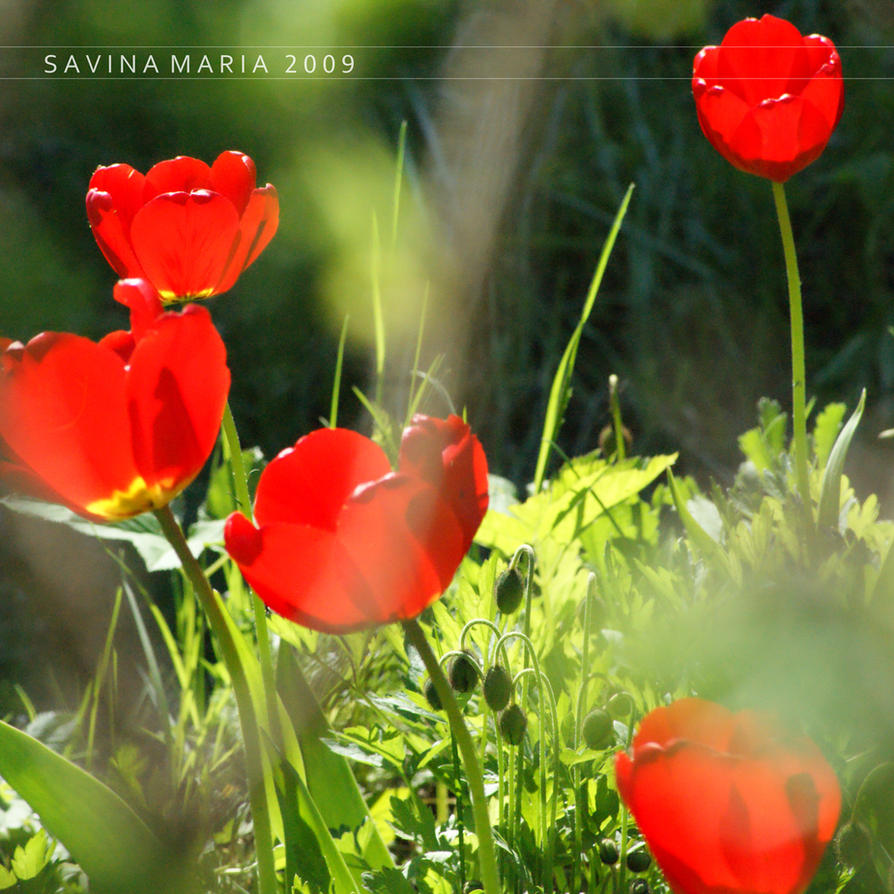 lovely flowers_127 by Marsulu