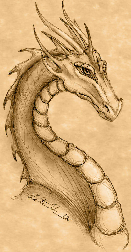 Dragon Drawing by Terrizae on DeviantArt