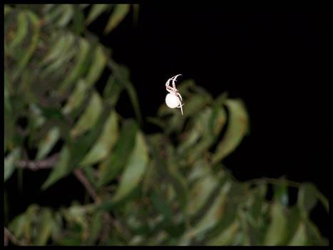 holy spider.