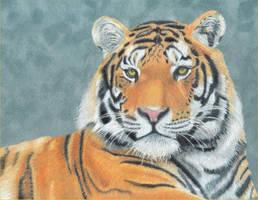 Tiger - 1st in Wildlife Series by ElwynEllessar