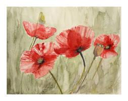 poppys6 by modliszqa
