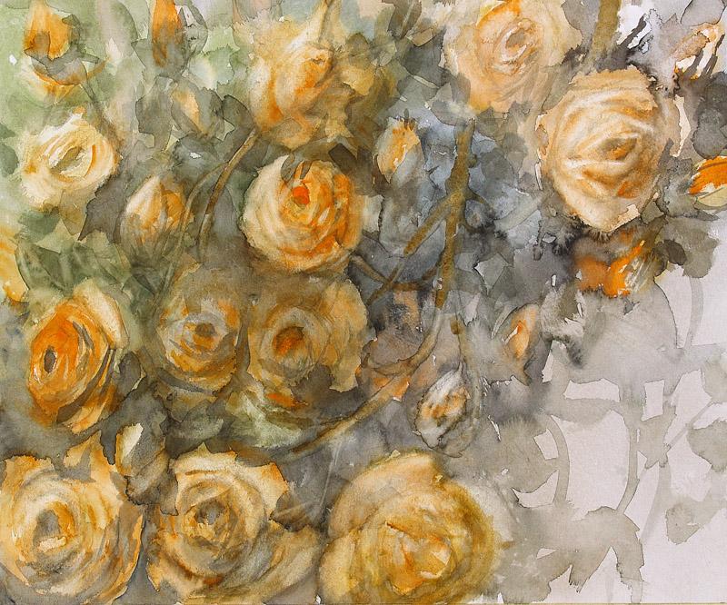 Pnace roze Climbing roses by modliszqa