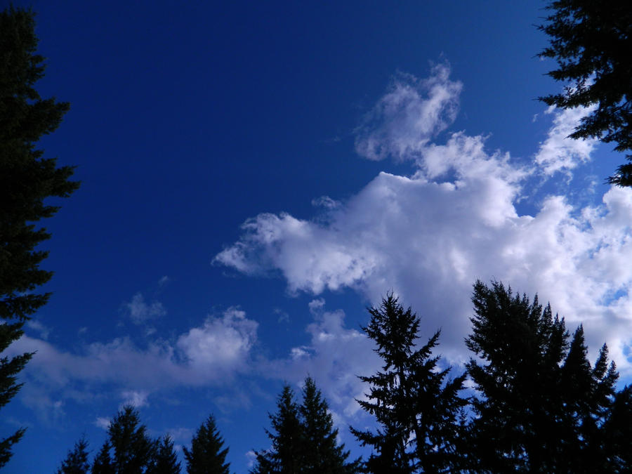 Blue Above The Trees by bluedragoneye