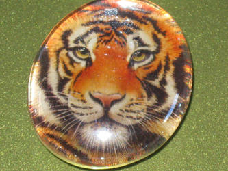 MM: Tiger by renky