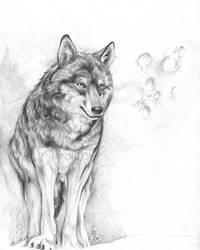 Wolf Moon by mayshing
