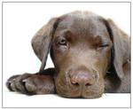 Puppy Love ID