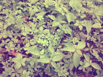 Green after rain by pooribu