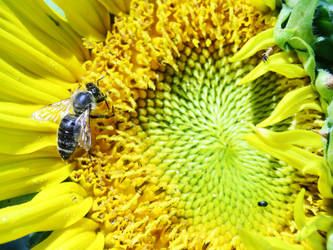 Bee by MichalSadilek