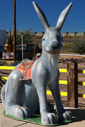 Untitled  Jack Rabbit by NDCott