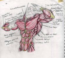 Anatomy study on The Tick by Anammic