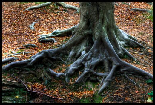 Elder Root