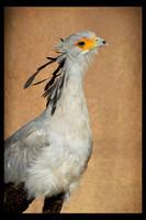 Secretary Bird by rgphoto777