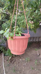 Hanging pot with flowers [1/2]