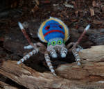 # Spiderpeacock by MagicMicrokosmos27