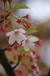Vintage Blossom.