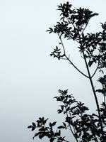 branch by ohfudge7