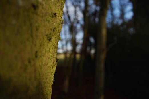 Tree side