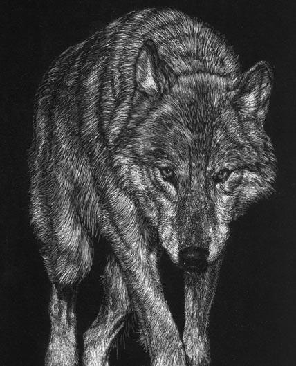 wolfywolf by thegreymirror
