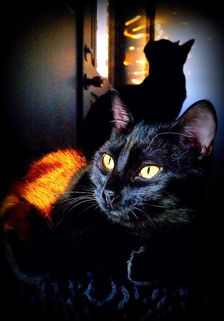 Shadow Cats by FelaraMysticat