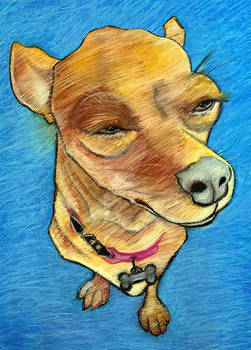 Zoe the Chiweenie Series #1 - Squinty Eyes