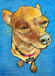 Zoe the Chiweenie Series #1 - Squinty Eyes by RachaelGarcia