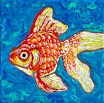 Time-Lapse: 1st Goldfish